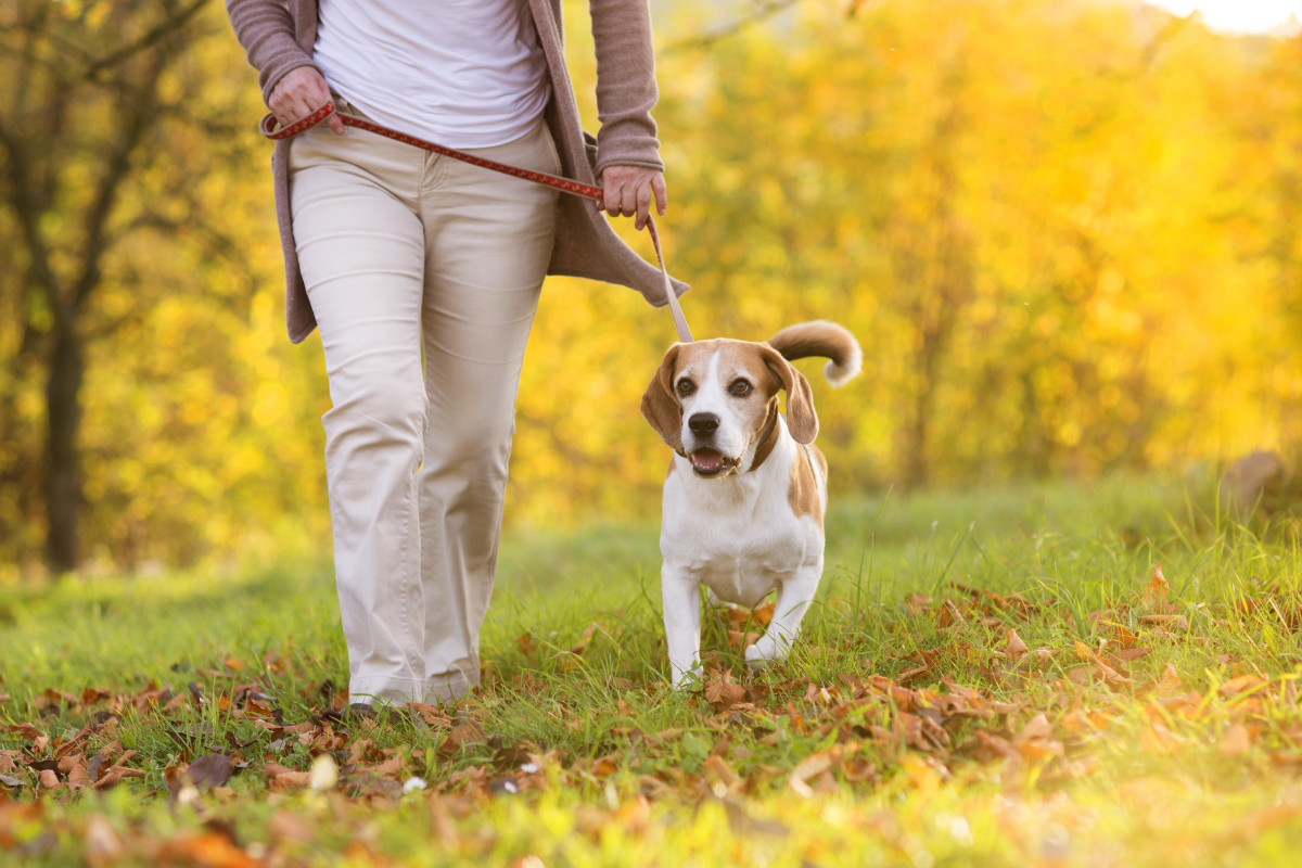 Dog friendly walking routes Brighouse